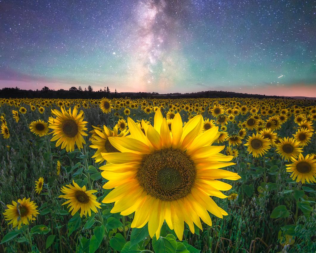 Field of a Thousand Suns